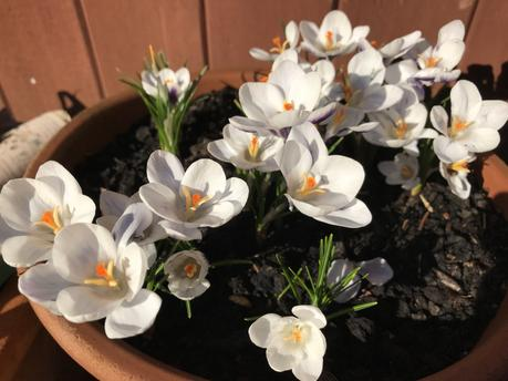 Six on Saturday 16-02-2019