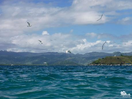Hunting sea birds