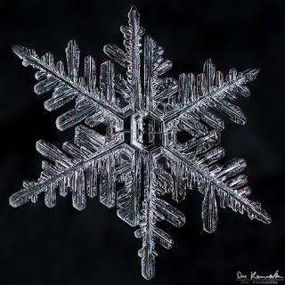Don Komarechka Snowflake Gallery