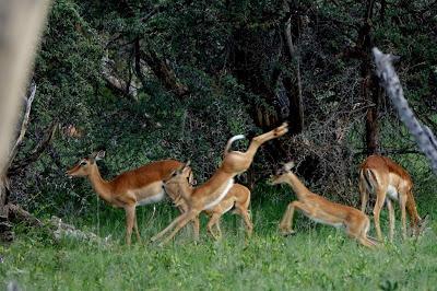 ZIMBABWE, Animals of Hwange National Park, Guest Post by Karen Minkowski