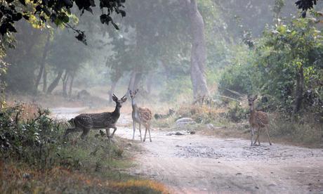 WILDLIFE TOURISM IN INDIA