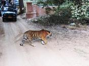 Wildlife Tourism India