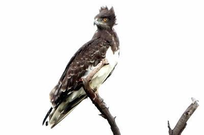 ZIMBABWE, Birds of Hwange National Park, Guest Post by Karen Minkowski