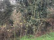 Tree Following March 2019 Early Start
