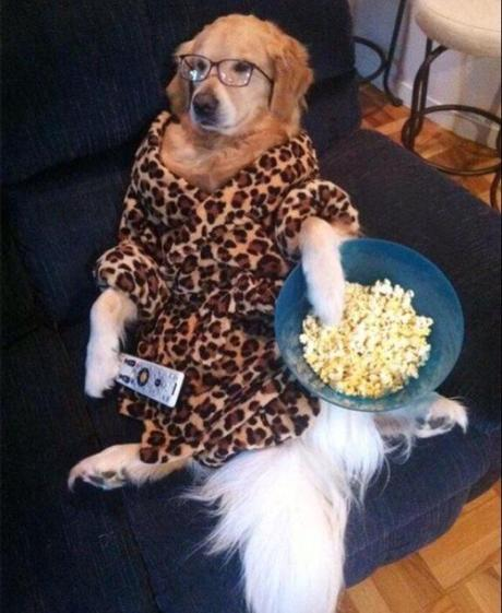 Can Dogs Eat Popcorn? Is It Safe For Them?