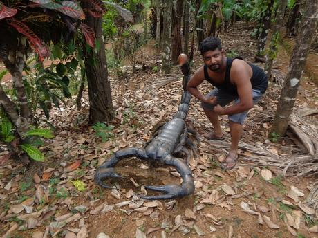 162) Kodachadri & Kavaledurga Trek: (1,2,3,4/11/2018)