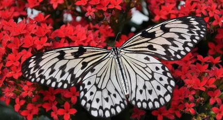 Image: Butterfly, Image by Jondolar Schnurr from Pixabay