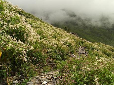 Valley of Flowers Trek Uttrakhand