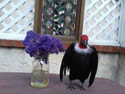 Image: BirdBusters Realistic Vulture Prop 9 inches tall, A Great Halloween prop, real feathers