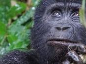 Uganda Safari Review Churchill Safaris Offered Wonderful Experience