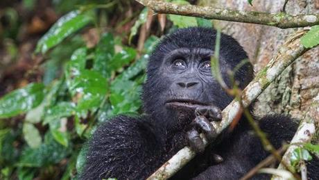 Uganda Safari Review – Churchill Safaris Offered a Wonderful Experience