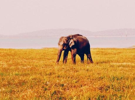 Udawalawe and Yala
