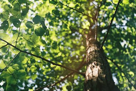 5 Things to Remember When Caring for Trees in the Spring