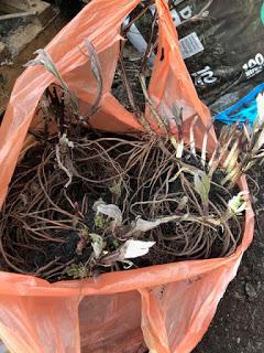 A bag full of plants