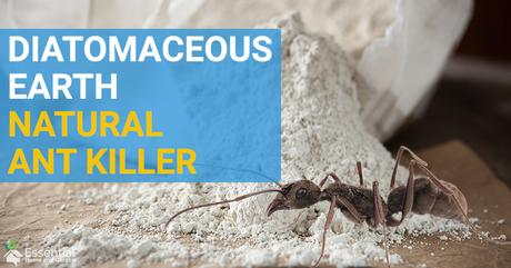 Kill Ants Naturally with Diatomaceous Earth