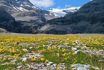 Alpine Tundra Biome Location Climate Vegetation And