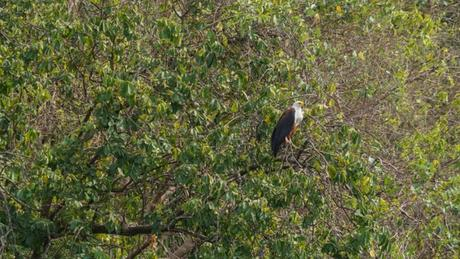 9 Animals We Spotted in Murchison Falls National Park, Uganda
