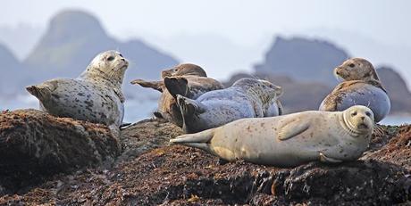 Image: Seals Resting on a Rock, by Skeeze on Pixabay
