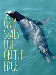 Image: Watch Grey Seals: Life on the Edge | With unparalleled access to a major seal breeding colony on the Blasket Islands, off the west coast of Ireland, this revealing documentary follows the investigation into a random seal attack and the lives of the seals who survived