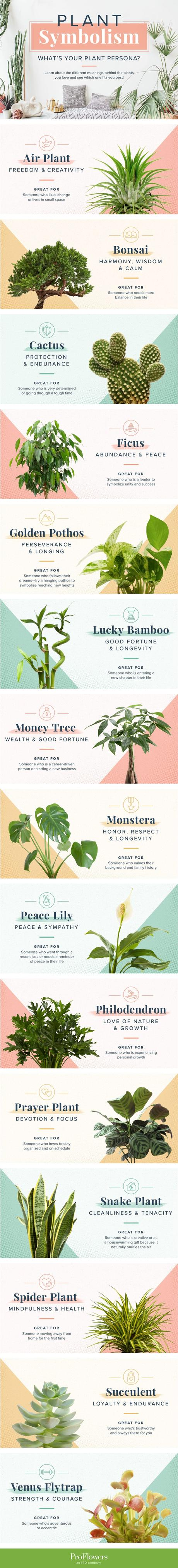 Image: Plant Symbolism Guide: 31 Plants for Every Personality