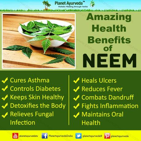Health Benefits and Medicinal uses of Neem-Azadirachta indica