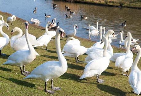 A Sunny Sunday At Herrington Country Park & New Youtube Video