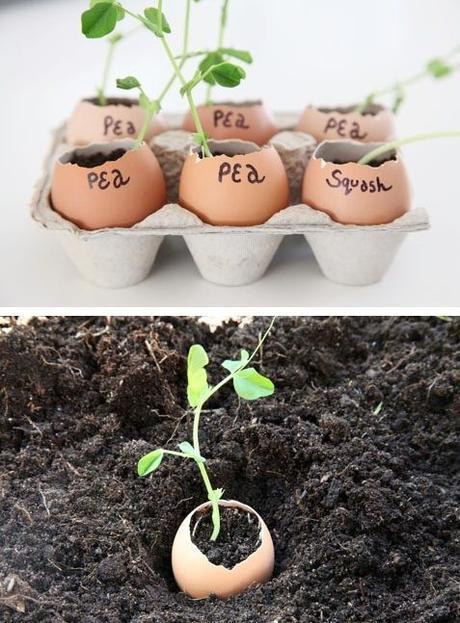 Get, Set, Garden!