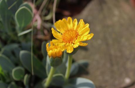 Garden Bloggers Bloom Day