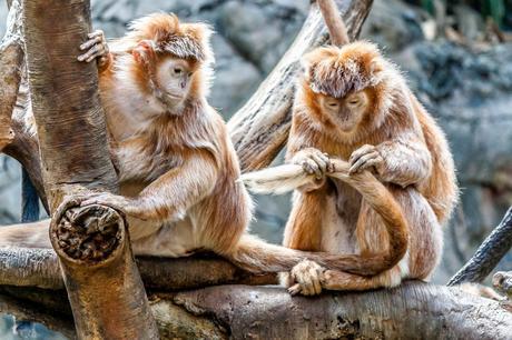 monkey animal pet wildlife tree plant nature branch