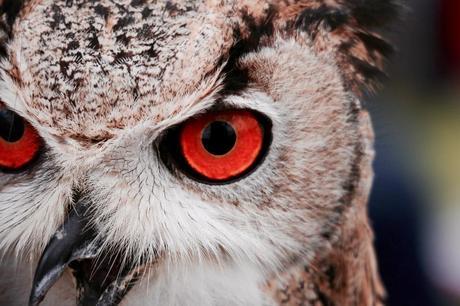 owl bird animal pet wildlife