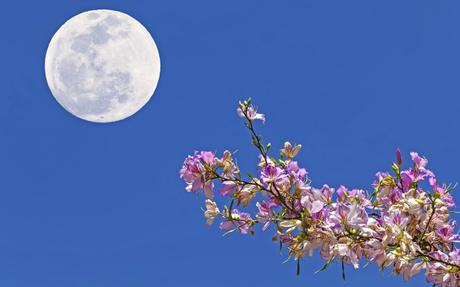 Full moon meditation with Metatron: Moon of Awakening on April 19
