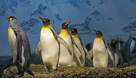 Image: King Penguins, by Marcel Langthim on Pixabay