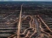Biodiversity Loss Human Extinction