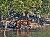 Wonderful Wildlife Experience Sundarbans