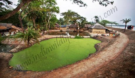 local village sightseeing in sundarbans national parks-min