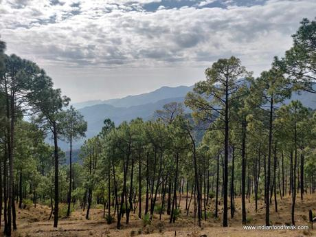 Fortune Select Forest Hills, Solan (Near Kasauli): Complete Sukoon!