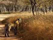 Ranthambore National Park: Retreat Wildlife Lovers