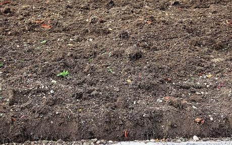 humus-ground-arable-autumn-fallow