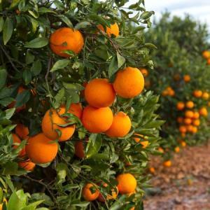 Bitter Orange – Claire Fuller