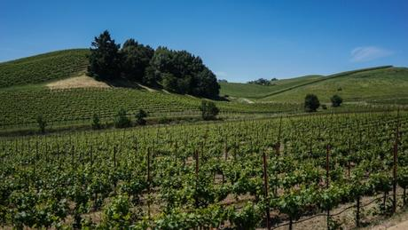 Napa or Sonoma? Find Out Which California Wine Region is Right For You