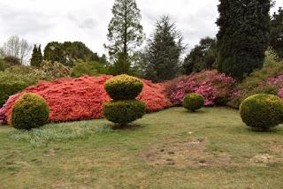 An afternoon at Leonardslee Lakes and Gardens