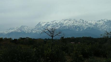 Escape to Palampur in 2019 Summers.