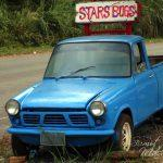 Star Bugs Cafe – In the middle of Abundant Nature