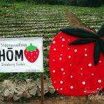 Hom Strawberry Garden – Cafe, Store & Garden
