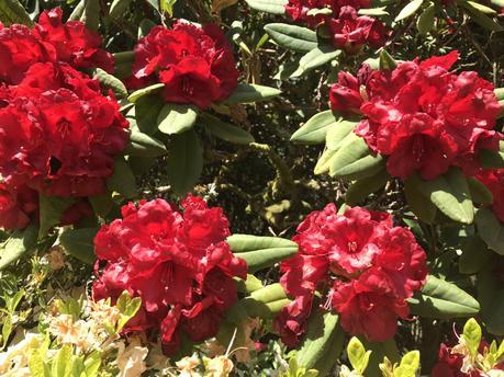 Exbury Gardens in its Glory