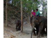 Patara Elephant Farm Abode Rescued Thai Elephants