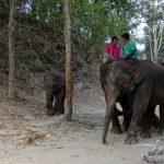 Patara Elephant Farm – The Abode of the Rescued Thai Elephants