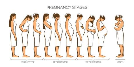 pregnancy stages photo