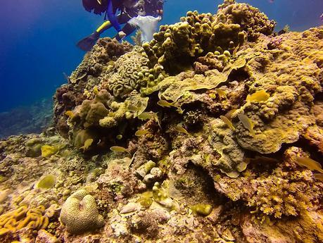 Healthy coralhead