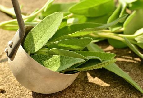 sage-herbs-culinary-herbs-healthy
